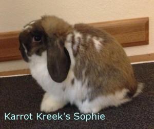 Karrot Kreek's Sophie